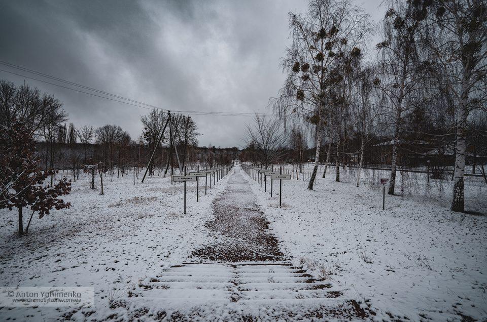 Аллея «Память Полесья» в Чернобыле