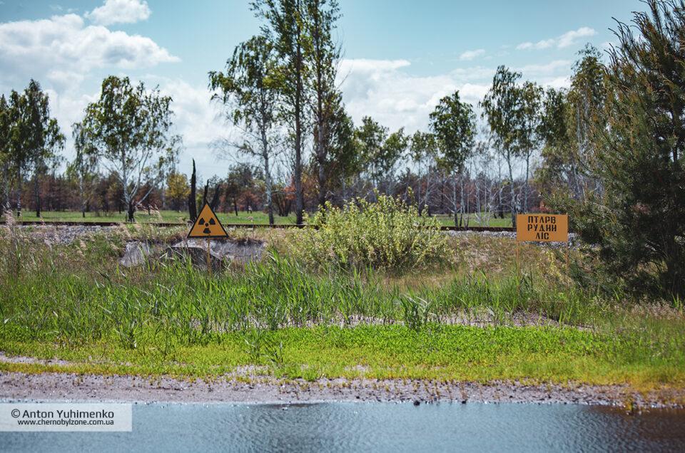 Природа восстанавливается после пожаров в Чернобыле